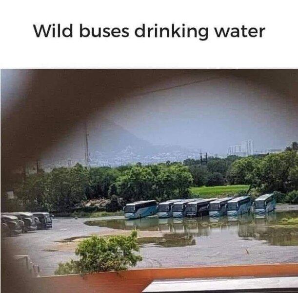 Wild Buses.jpg