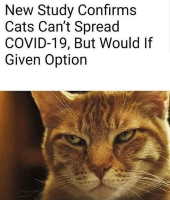 Covid Cats.JPG