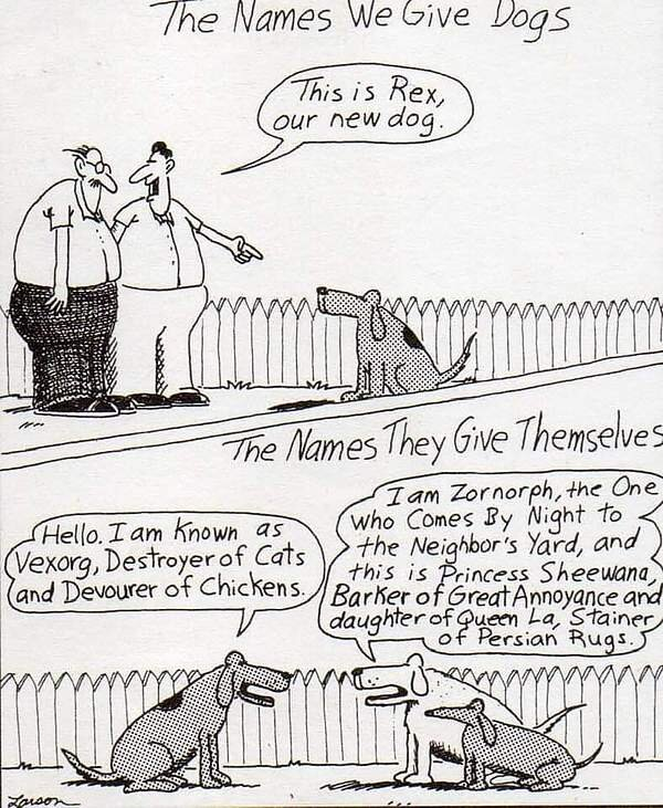 How Dogs Name Themselves.jpg