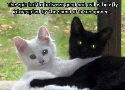 Cats Good and Evil.jpg