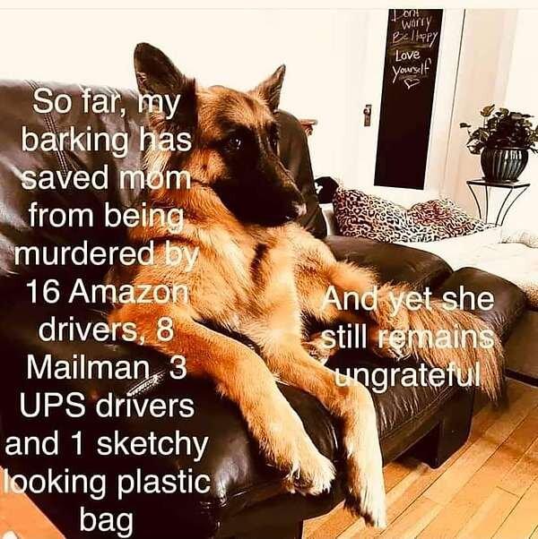 Dog Saves.jpg