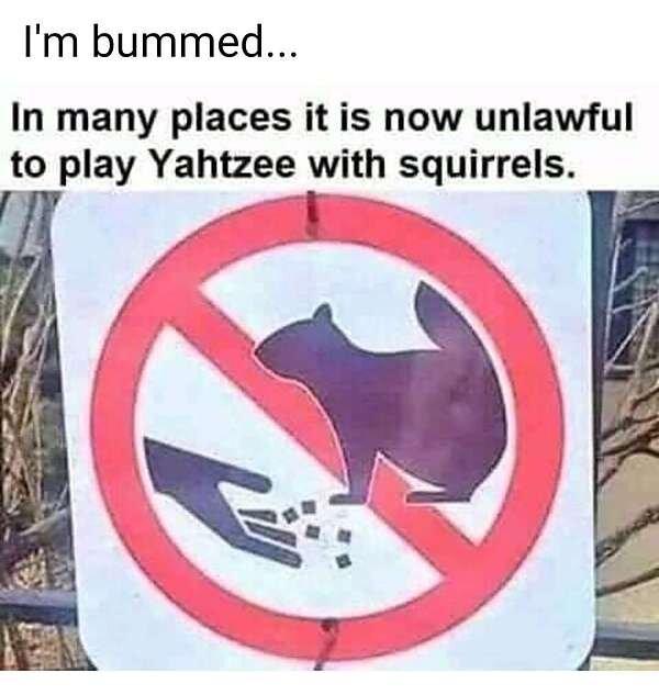 Squirrel Yatzee.jpg